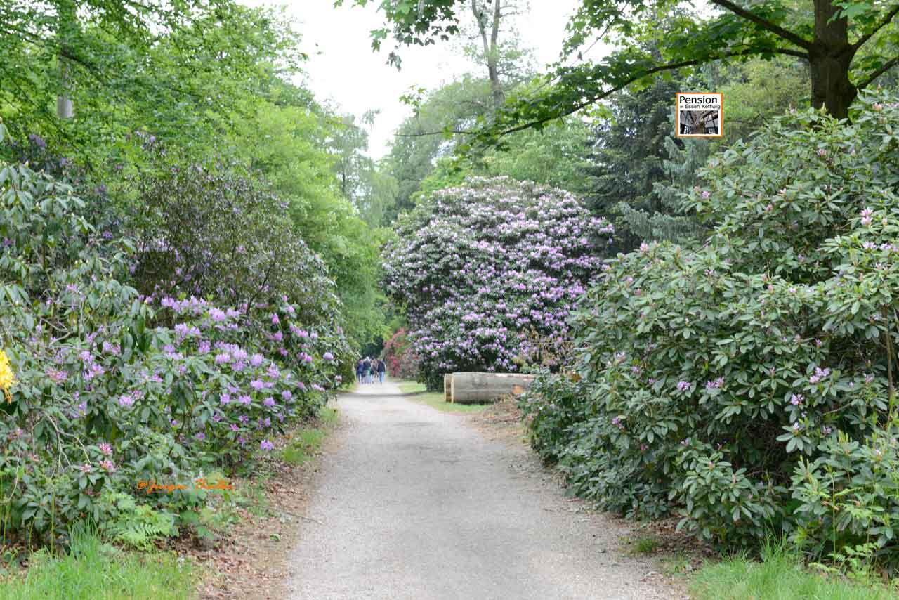 Rhododendronpark Heltorf